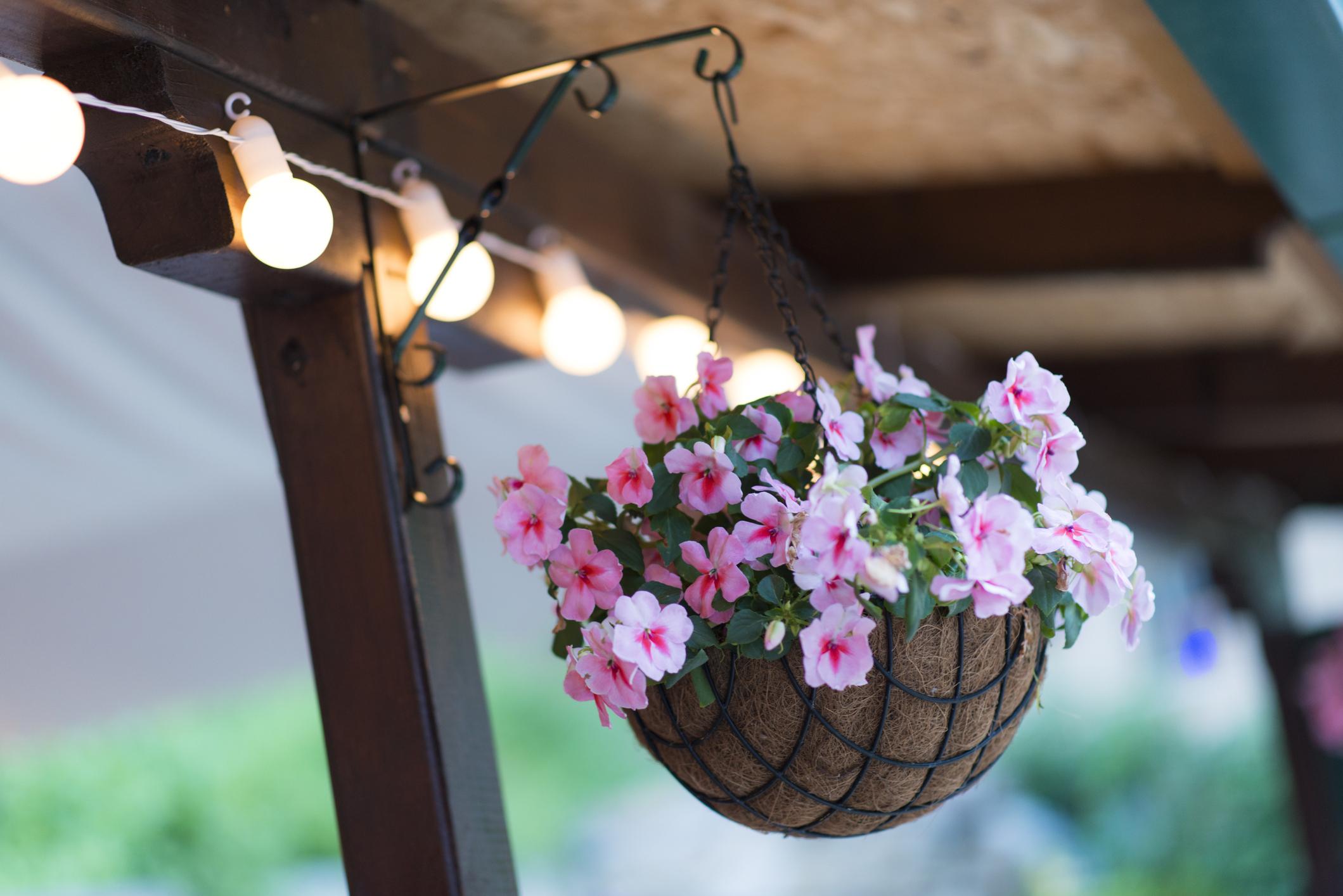 Beautiful Purple Flowers in Hanging Basket
