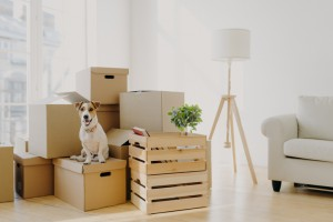 Photo of pedigree cute dog poses on pile of cardboard boxes with owner belongings, relocate in new flat, empty room with white walls, lamp and sofa, big window. Animals and Moving Day concept